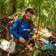 Tropenböden emittieren mehr CO2 als gedacht