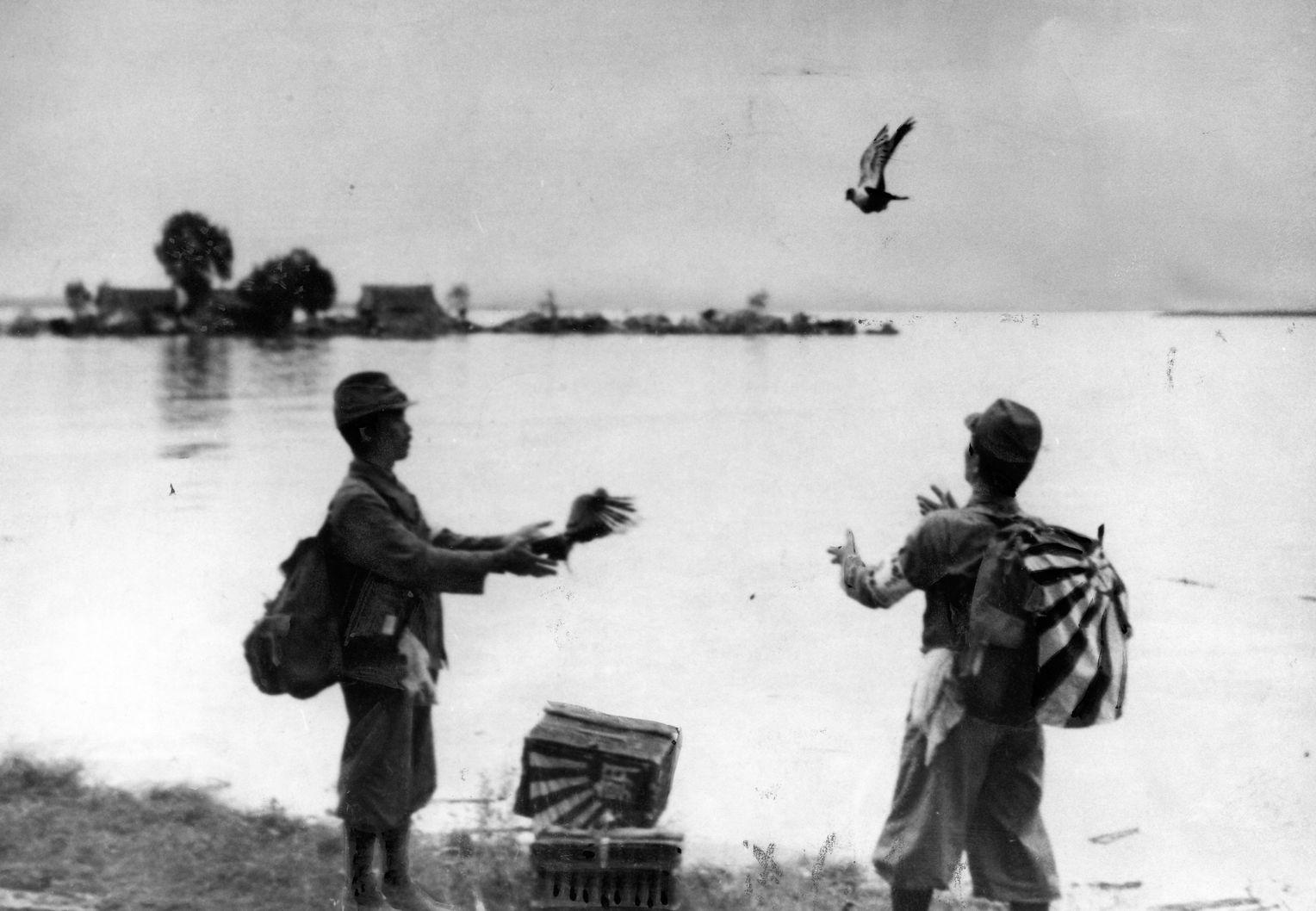 Zweiter Weltkrieg: Brieftauben als Geheimkuriere der Briten - DER SPIEGEL