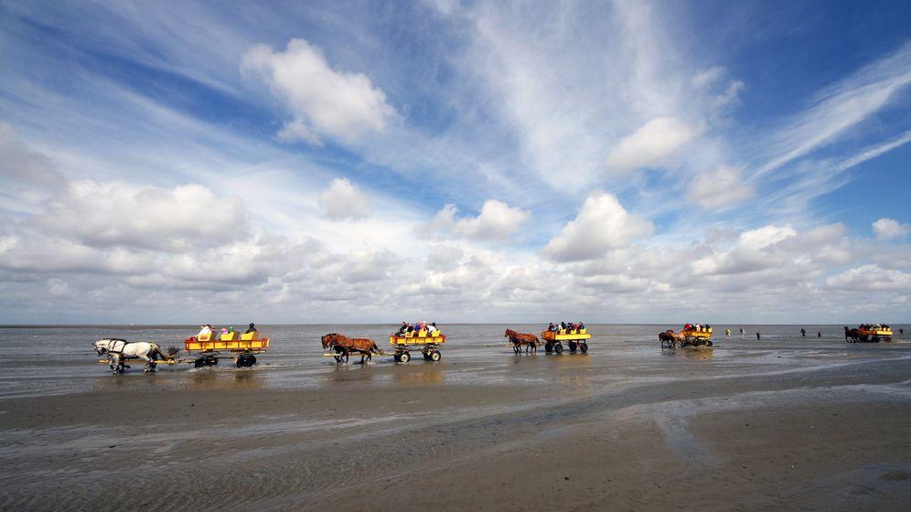 Unesco: Hamburgisches Wattenmeer ist Welterbe