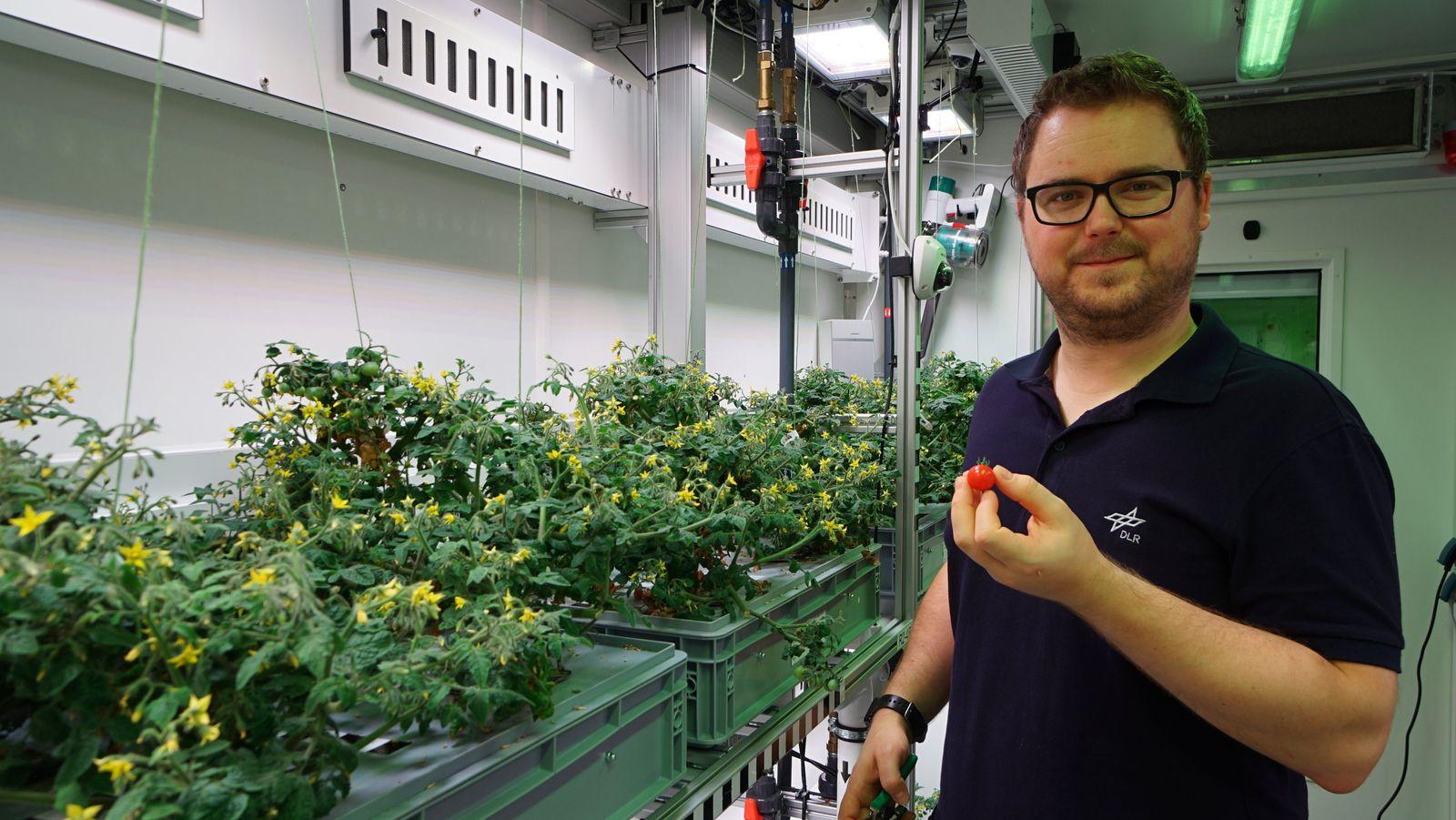 Gemüse im Antarktis-Gewächshaus