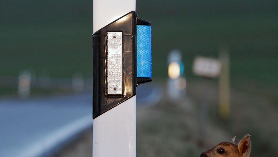 Reflektoren an Leitpfosten (Symbolbild)