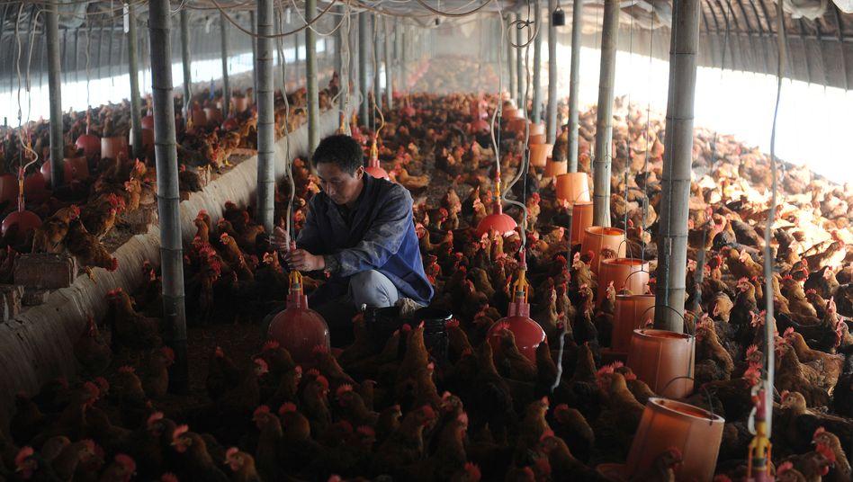 Hühnerfarm in China (Archiv)
