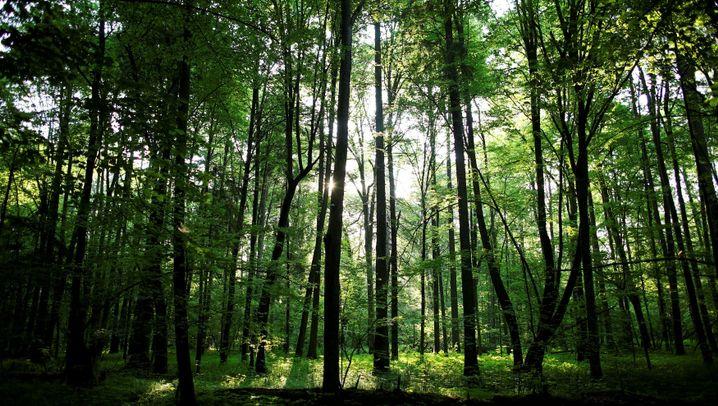 Polen: Kampf um den letzten Urwald