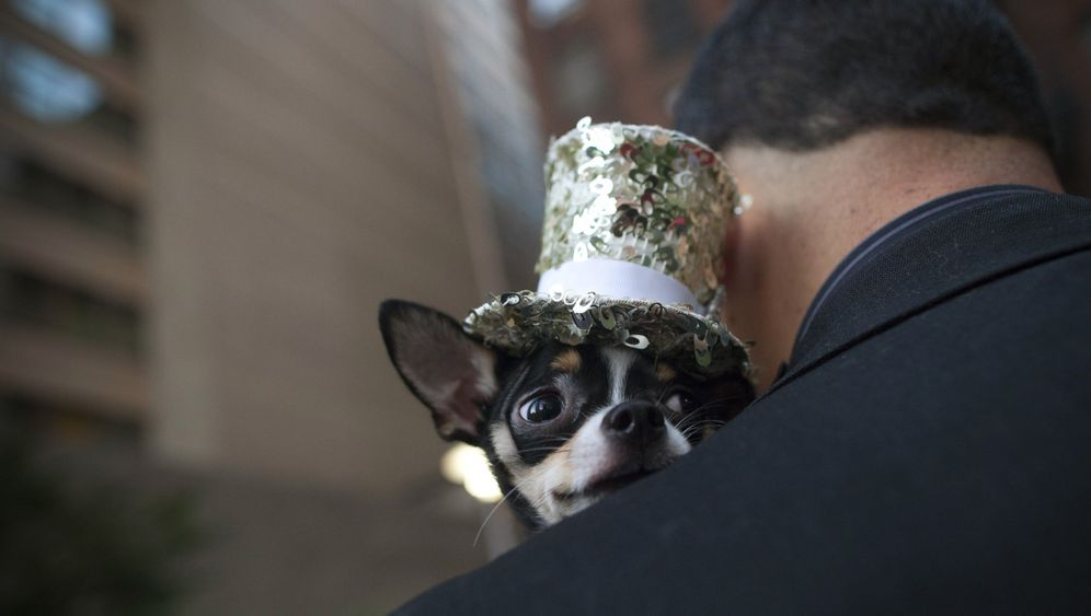 Hunde Modenschau in New York: DER SPIEGEL