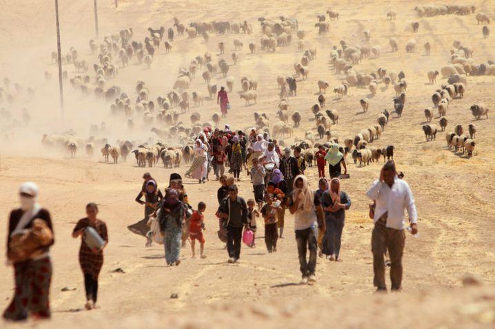 Vertreibung der Jesiden in Sinjar: Schreckliche Erinnerungen