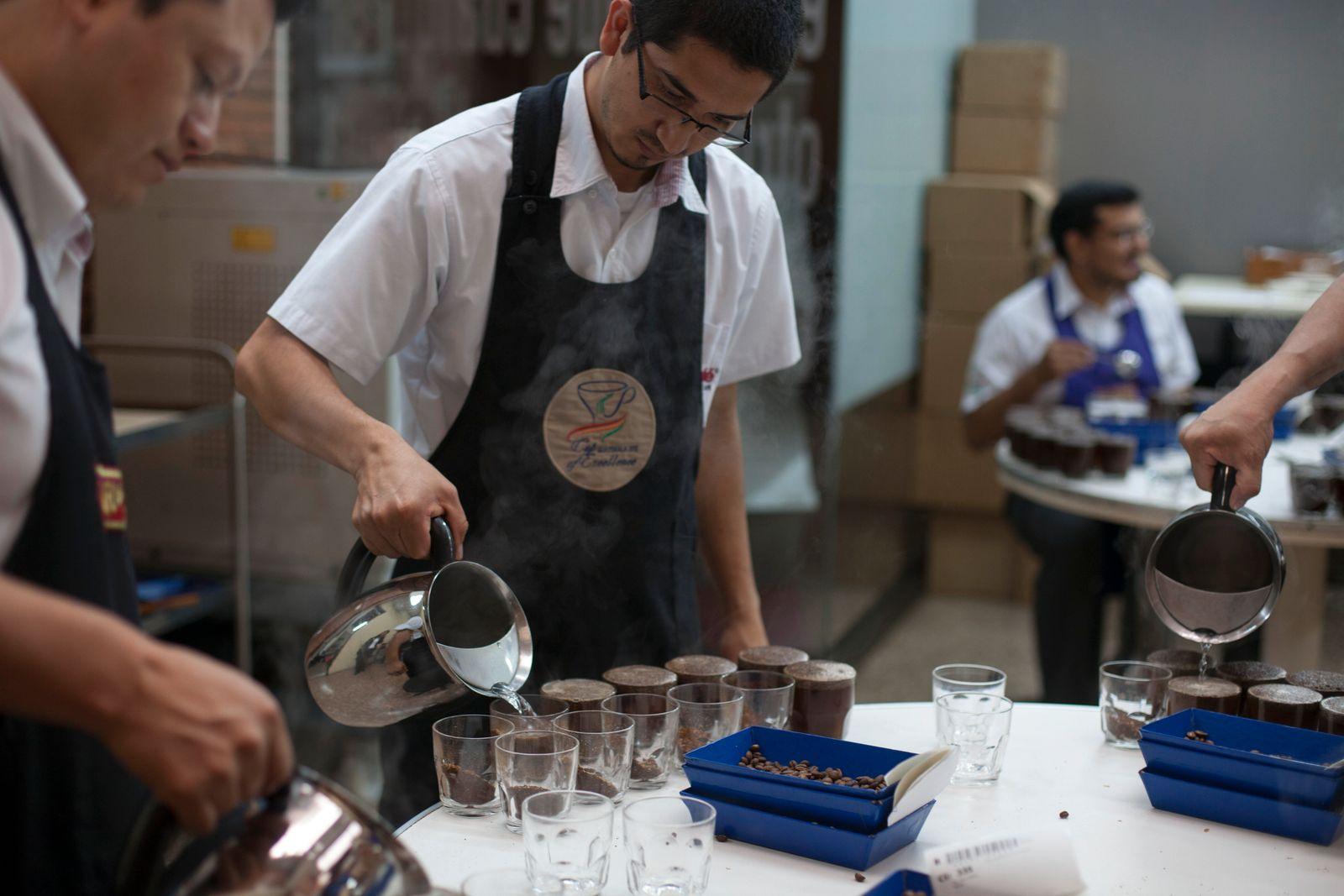 Guatemala Coffee Auction
