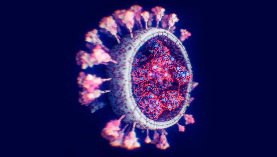 Computergenerierte Darstellung des Coronavirus Sars-CoV-2: Das Netz möglichst weit auswerfen