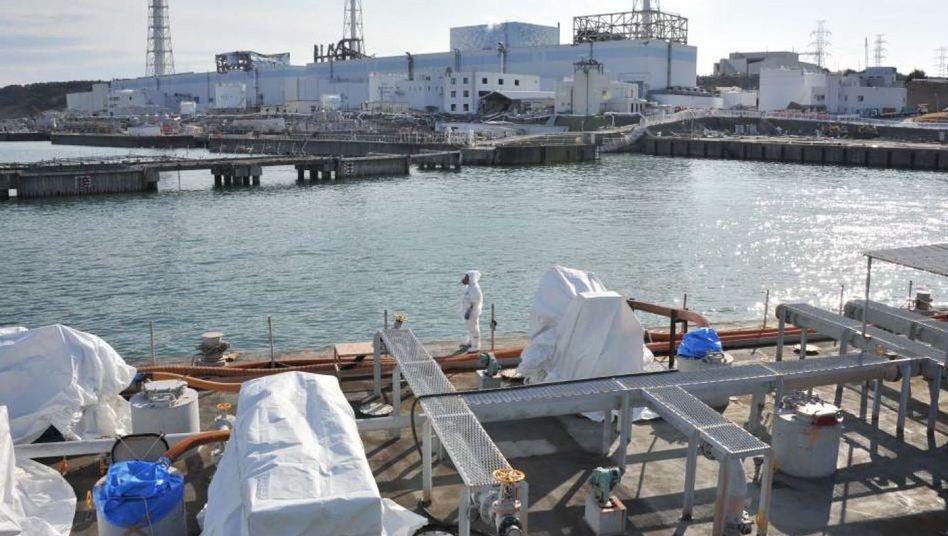 Krisen-AKW Fukushima: Meereswelt teilweise deutlich mit radioaktiven Partikeln belastet