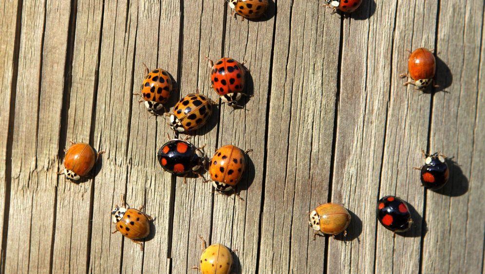 Invasive Arten: Neubürger im Biotop