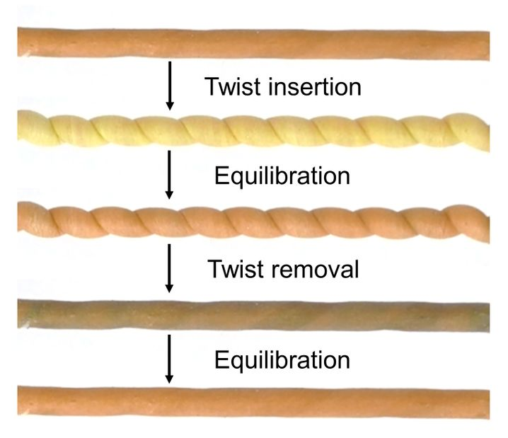 Die Farbe zeigt die Temperatur des Kautschuks an: Wird er eingerollt, wird er warm (gelb) und kühlt beim Entspannen ab (orange und braun)