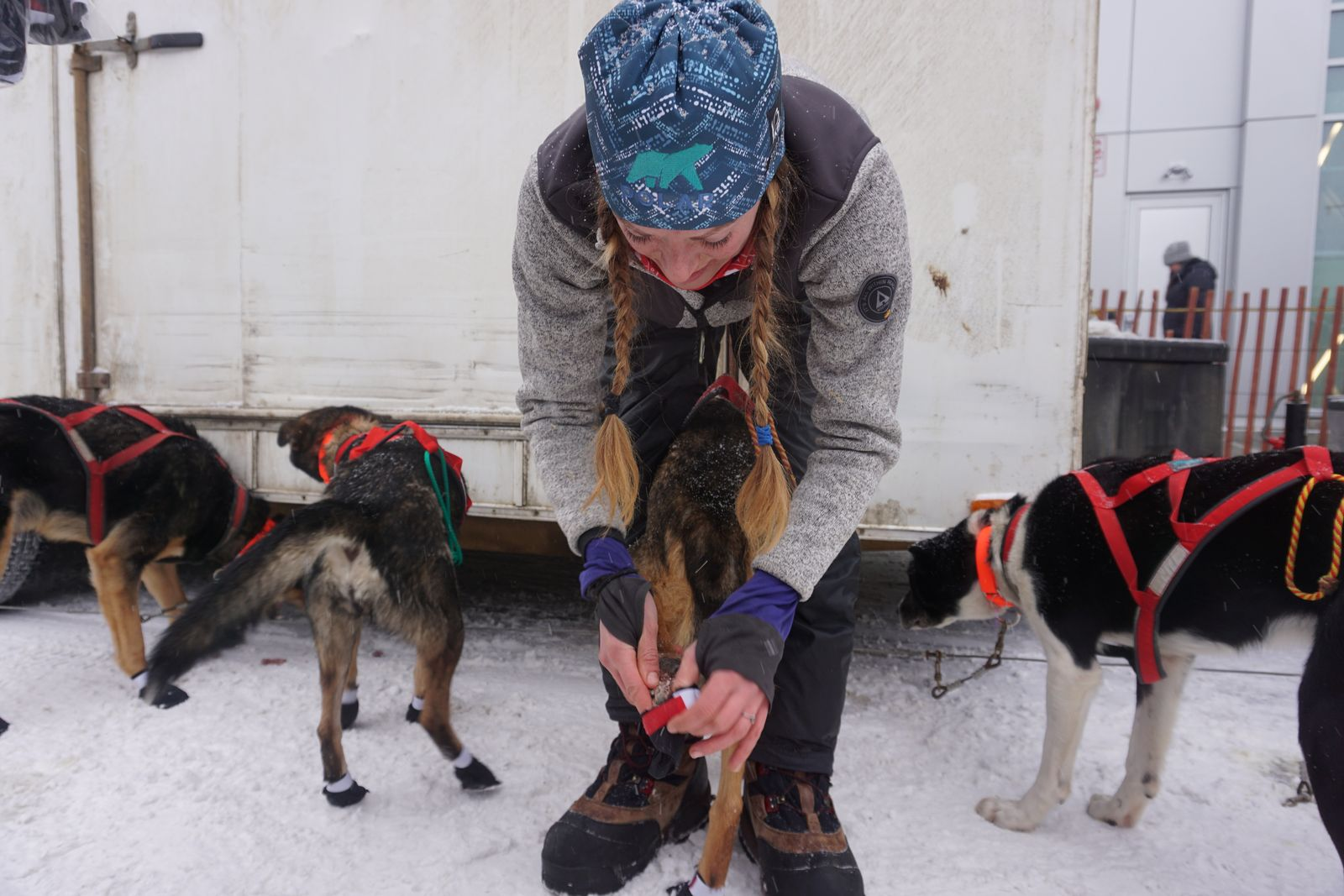 Musher Kristy Berington puts booties onto the feet of one of her team's dogs at the Anchorage ceremonial start of the 2020 Iditarod Trail Sled Dog Race