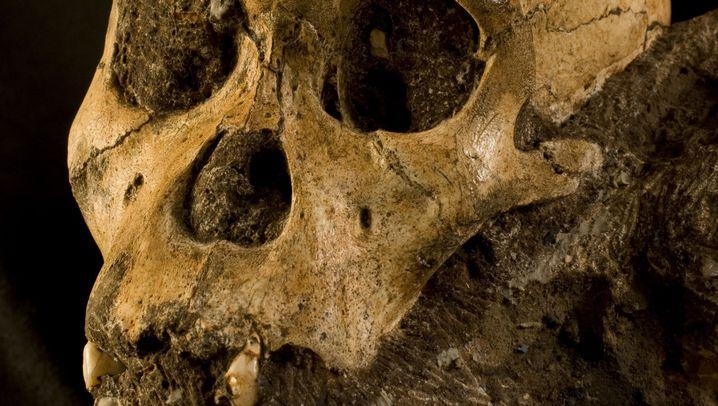 Australopithecus sediba: Der etwas modernere Vormensch