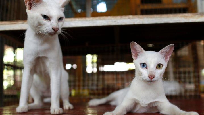Katzen-Domestizierung: Die zweitbesten Freunde des Menschen