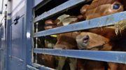 Länder bäumen sich gegen Qual-Tiertransporte auf