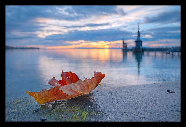 Blatt am Bodensee (überarbeitet): Leuchtendes Rot, entzerrter Hintergrund