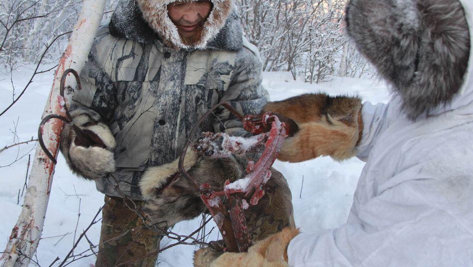 Jakutischer Jäger und Bauer mit Wolfsfalle (im Januar 2013): 3000 Wölfe sollen sterben
