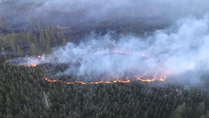 Verheerende Waldbrände: Deutsche Feuerwehrleute löschen in Schweden