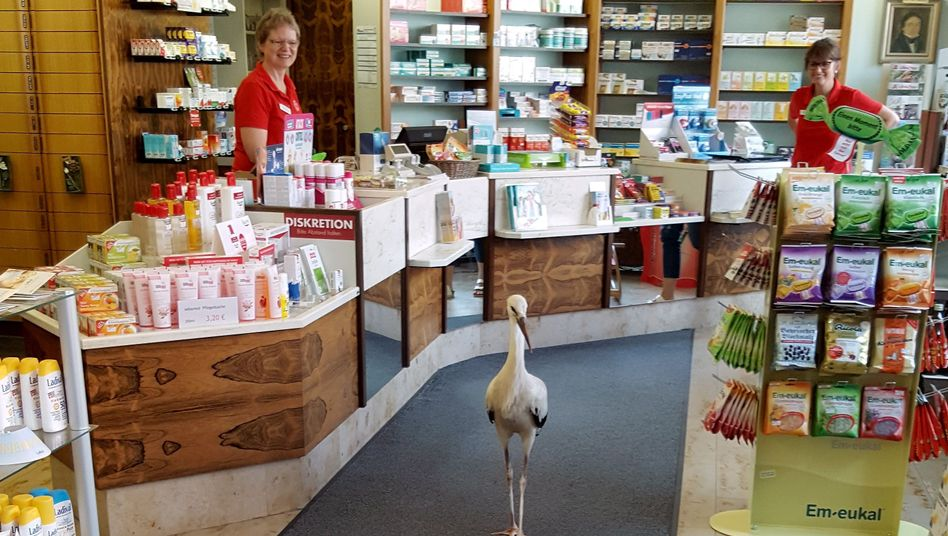 Storch in Apotheke