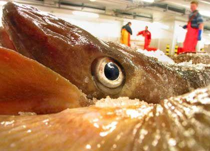 Das Auge isst mit: Nur was frisch aussieht, wird gekauft