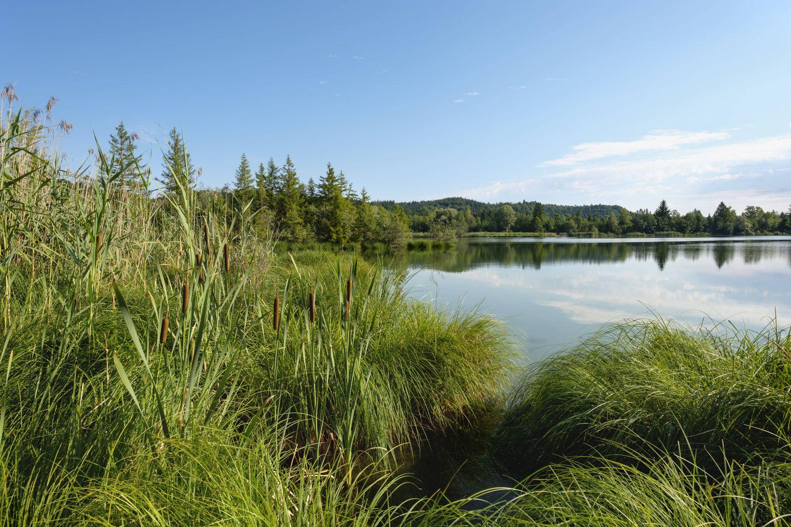 Germany Bavaria Pupplinger Au Nature Reserve Isarauen Icking Reservoir PUBLICATIONxINxGERxSUIxAU