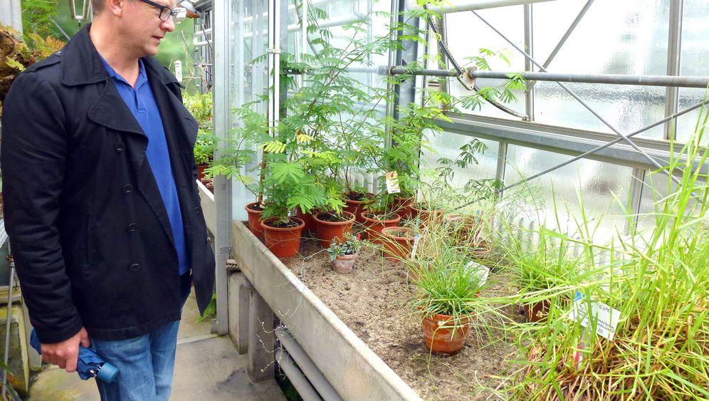 Deutschlands seltenste Pflanze: So sieht die Verarmte Segge aus