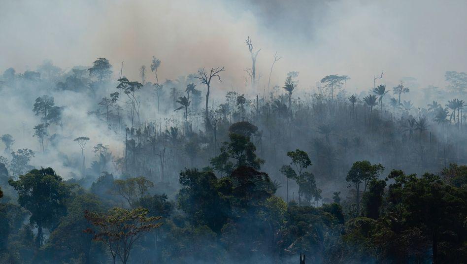 Größte Brandrodung aller Zeiten am Amazonas: Abgelenkt vom Corona-Streit.