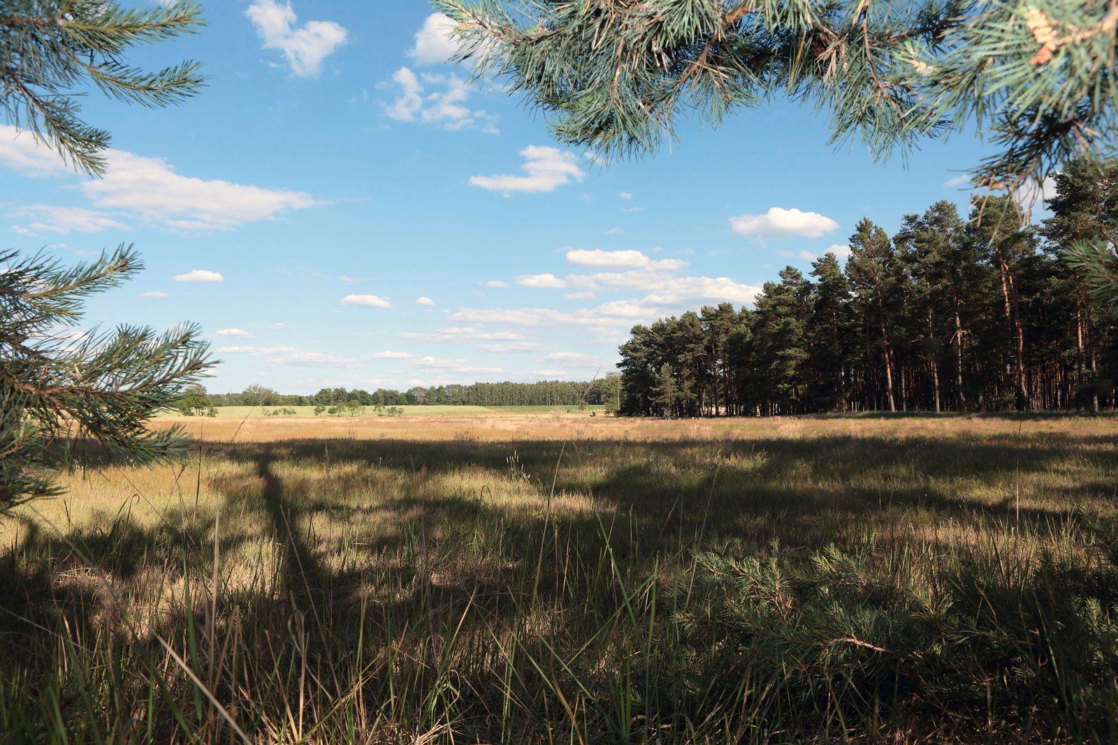 Heidewiese bei Mochow Brandenburg Deutschland xDEx