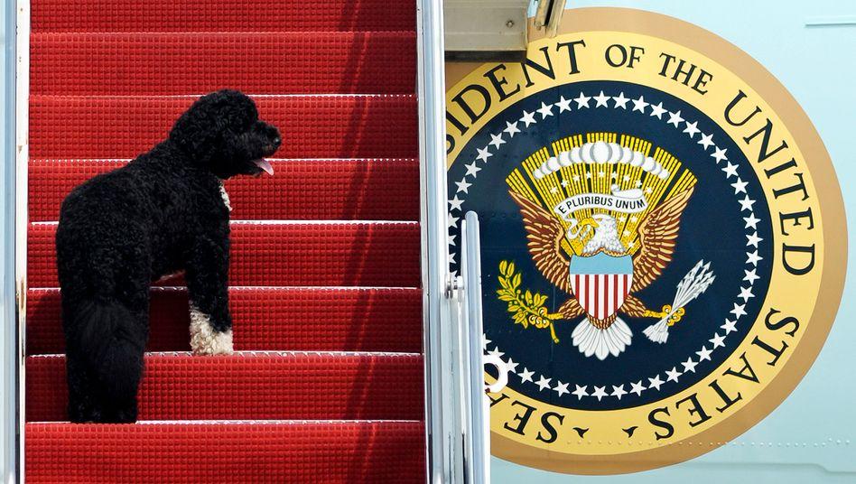 »Er ist ein Star«: Barack Obama über Bo
