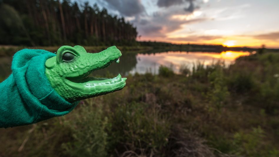 A crocodile hand puppet is the closest anyone has seen to a real reptile at Klauensee in Bavaria, despite days of searching.