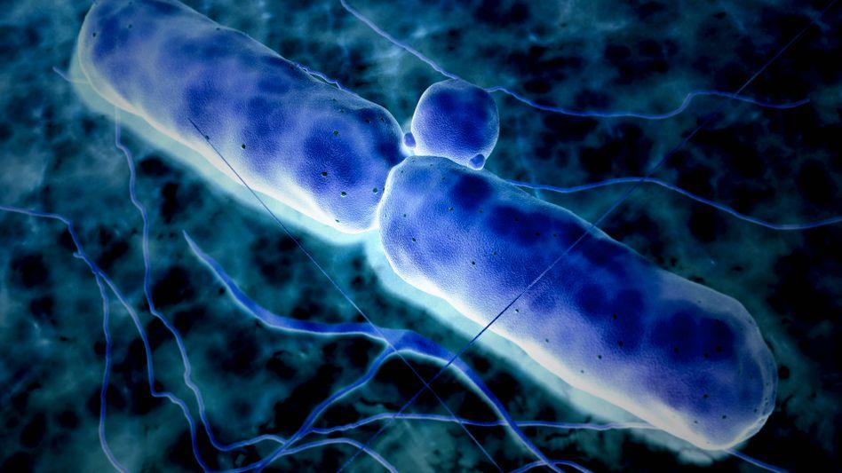 Bacillus anthracis, kurz Anthrax: Tödliche Infektionskrankheit