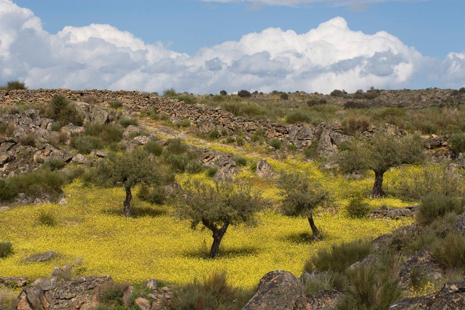 Landschaft mit Olivenbäumen © Faia Brava