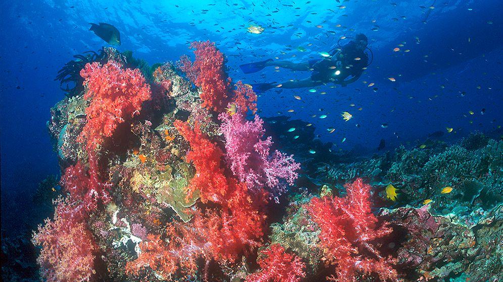 Tauchen in Thailand: Elegante Mantas, träge Walhaie