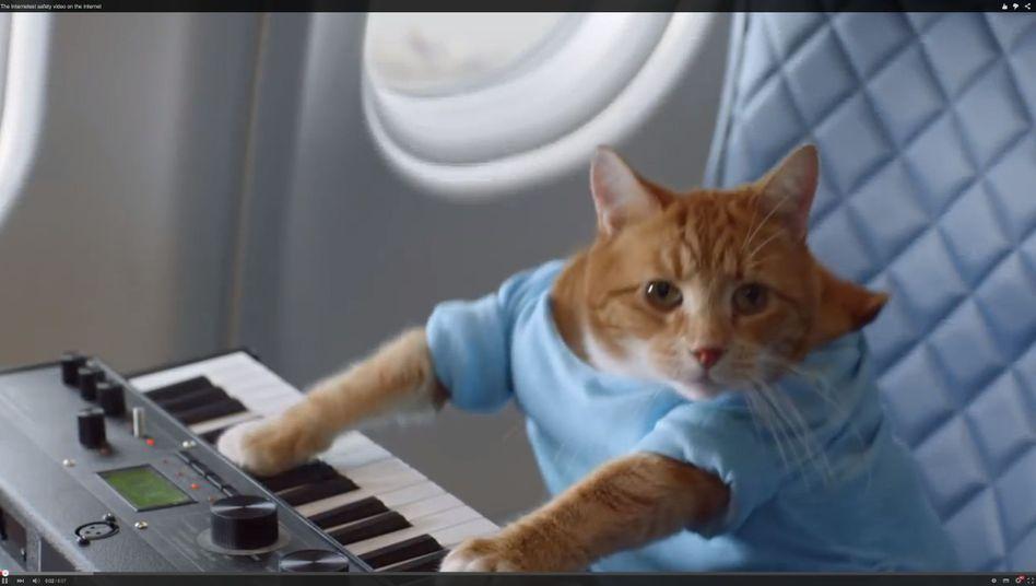 Katze am Keyboard: Eine von vielen Anspielungen aus dem Delta-Airlines-Sicherheitsvideo