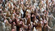 »In 50 Jahren werden wir mit Entsetzen auf die heutige Tierhaltung zurückschauen«