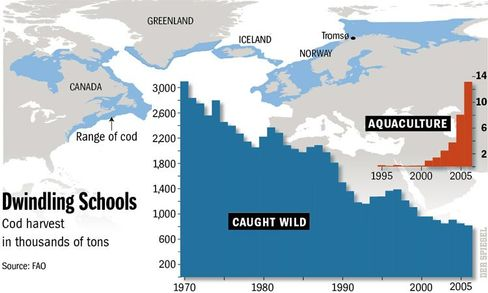 Cod harvest, then and now