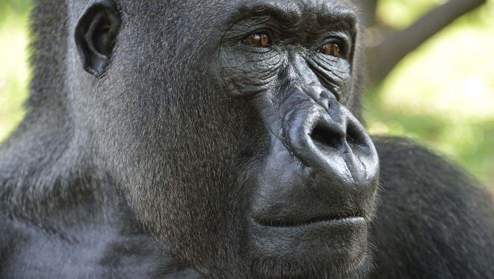 Gorillas und Waldelefanten: Tief in Kameruns Regenwald