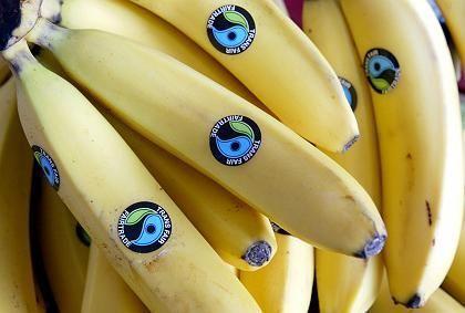 Bananen mit dem Fair-Trade-Siegel: Verbraucher haben die Wahl