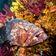 Meeresschutzgebiet nützt der Artenvielfalt genauso wie der Wirtschaft