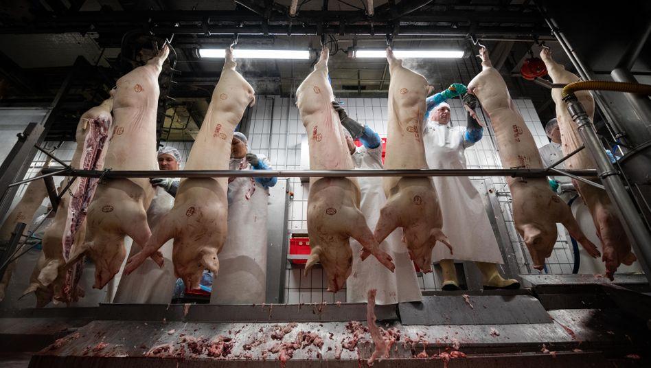 Schlachthof im niedersächsischen Garrel: In der Branche sind bis zu 90 Prozent der Belegschaft bei Subunternehmern angestellt