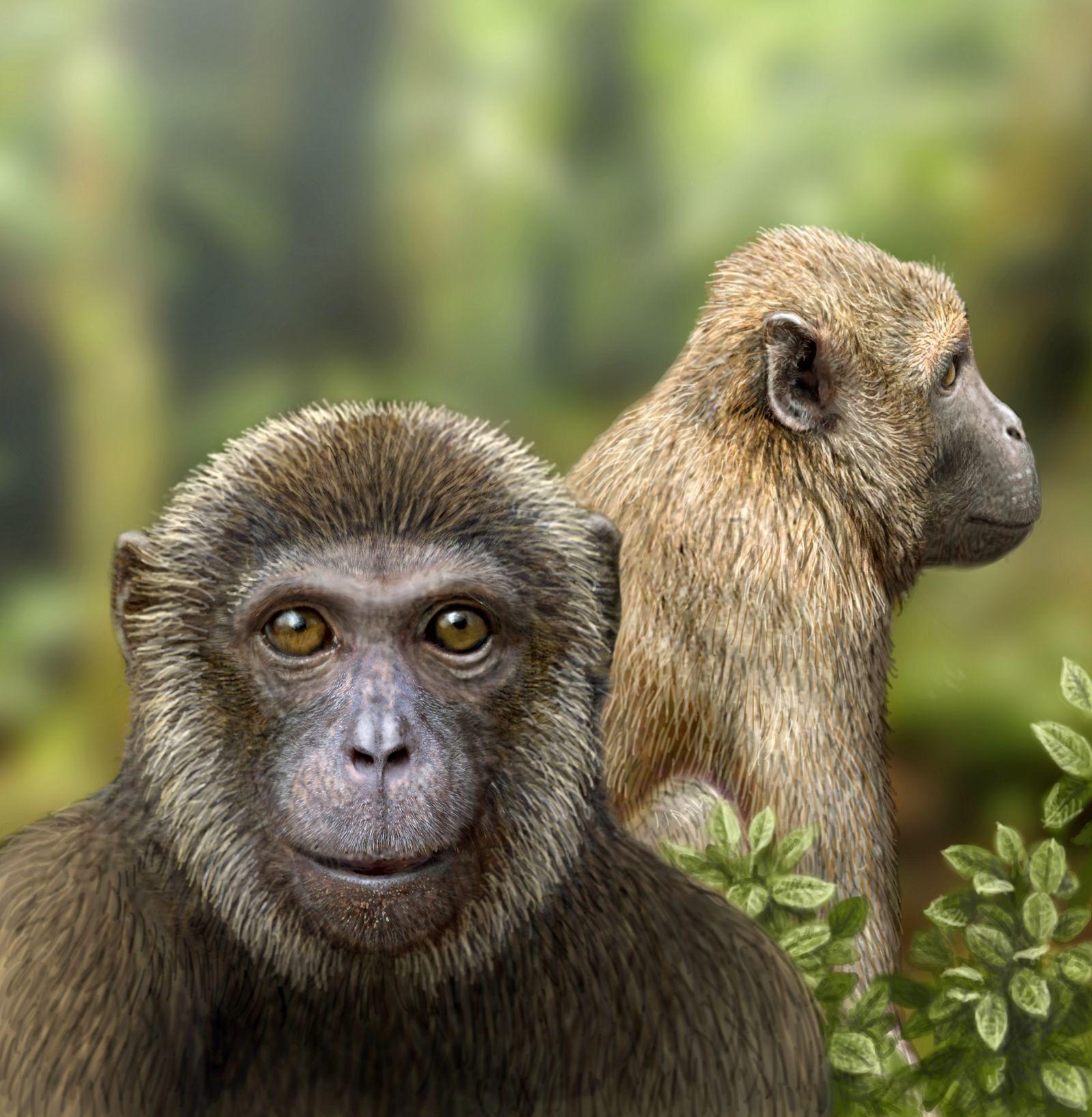 EINMALIGE VERWENDUNG Ãlstester Affe / Oligozän