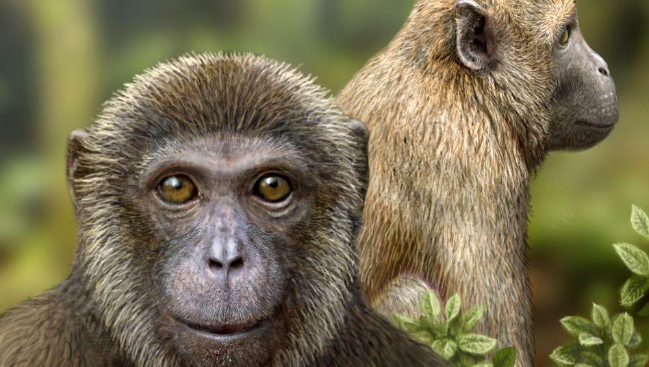 Rukwapithecus (vorn) und Nsungwepithecus gelten als älteste bekannte Vertreter von Menschenartigen (Hominoidea) und Altweltaffen