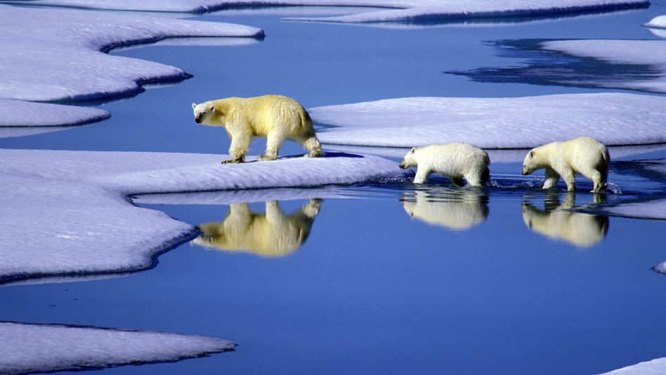 """""""Global warming is real and it is caused by humanity. But it is just as obvious that we have failed to embrace the policies that would best deal with this challenge."""""""