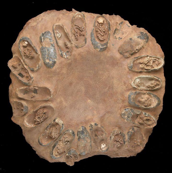 Raubsaurier-Gelege mit versteinerten Embryos: Viele Raptoren wurden von Elterntieren gepflegt