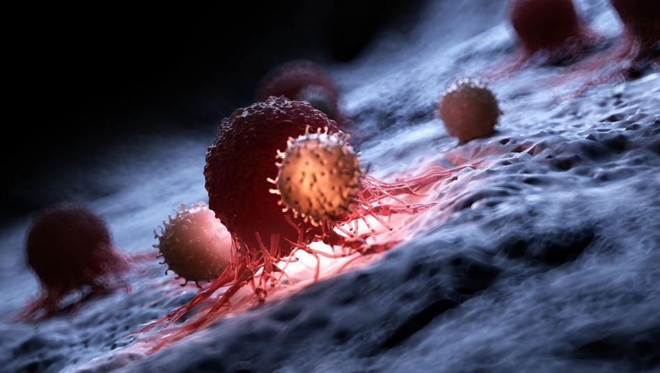 Blutzellen attackieren eine Krebszelle: Zum Selbstmord angeregt
