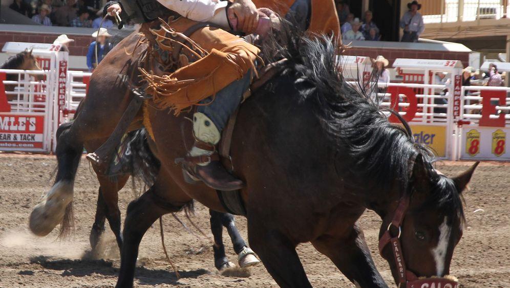 Calgary Stampede: Pilgerstätte der Cowboys