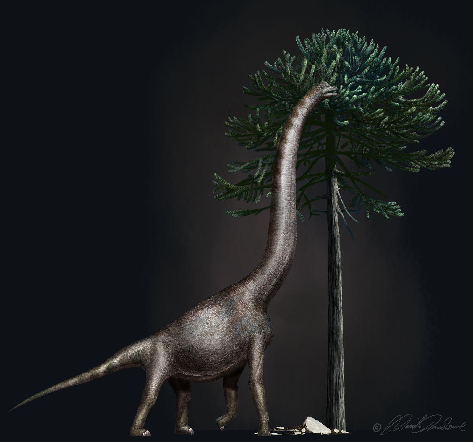 """SPERRFRIST 24. JULI 13.00 UHR / Dinosaurier """"Bigfoot"""""""