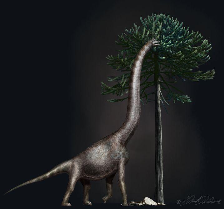 Künstlerische Darstellung eines Brachiosaurus