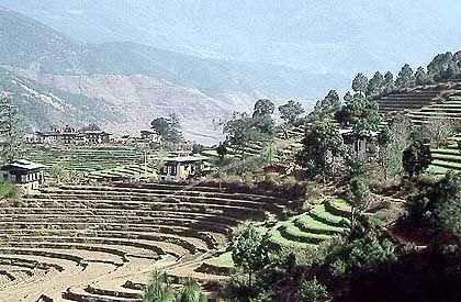 Terrassenlandschaft im Punakha-Tal: Der Großteil von Bhutan ist verkehrsmäßig noch nicht erschlossen