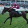 Video zeigt Jockey, der auf totes Pferd klettert