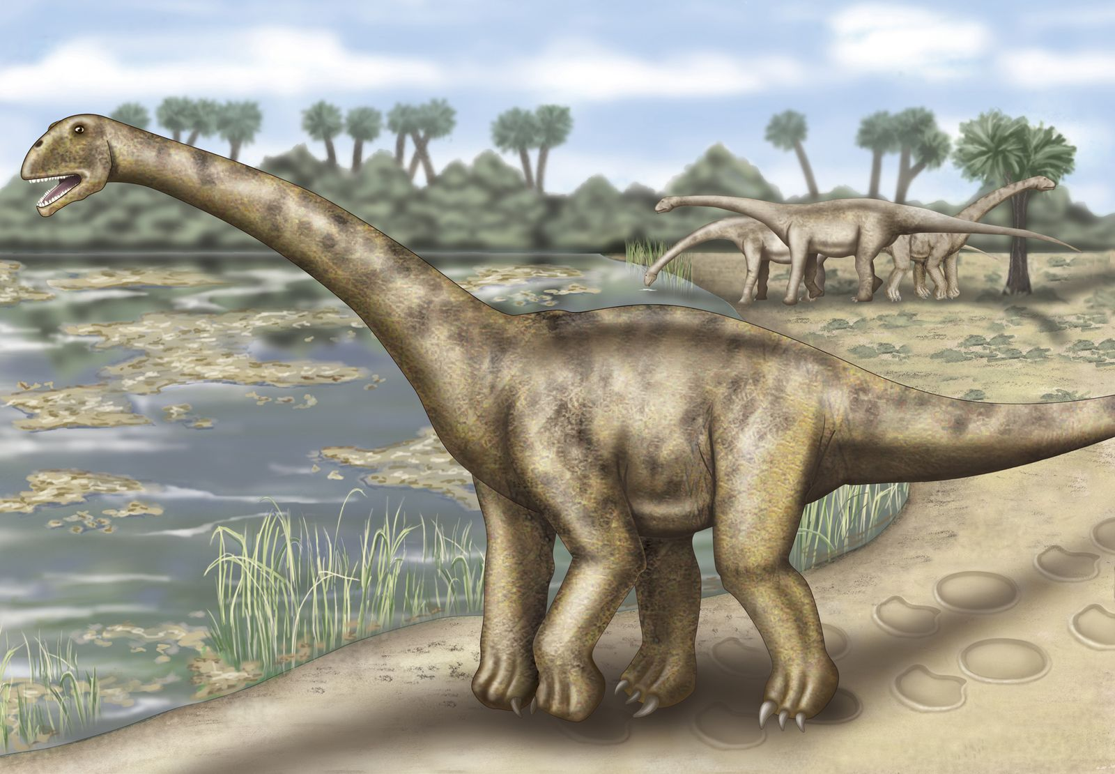 Sauropod / Dinosaurier / WISSENSCHAFT